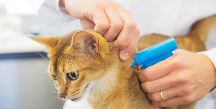 Чипирование кота