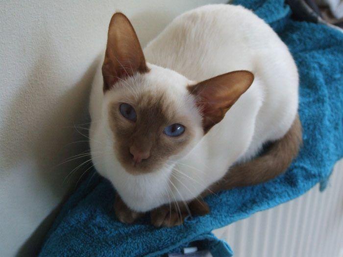 Какой возраст кошек и котов thumbnail