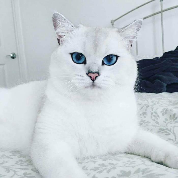 Самый красивый кот