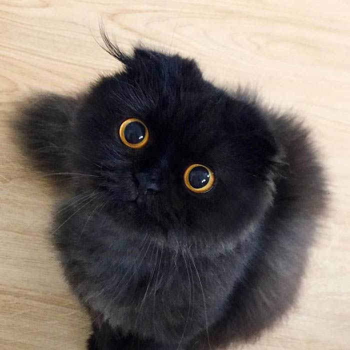 Желтые глаза у котенка