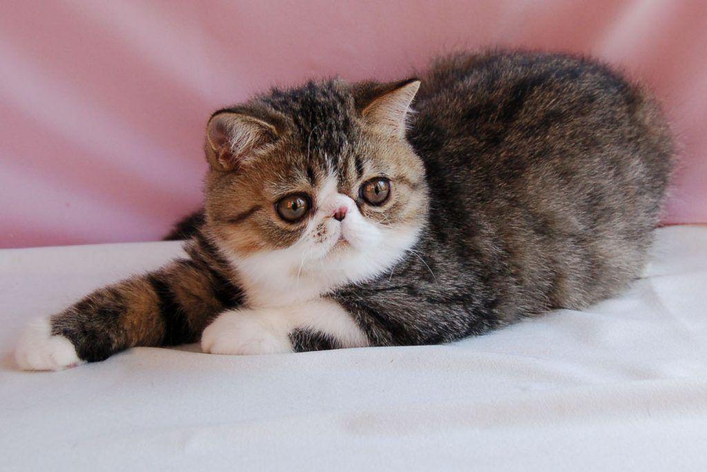 Разноцветные кошки фото всякий