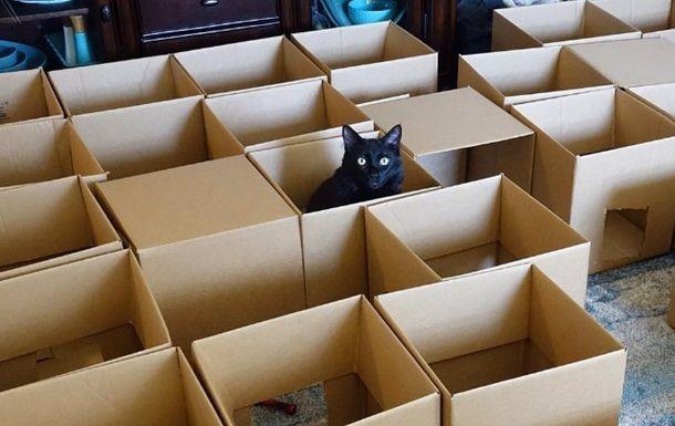 Лабиринт для кошки