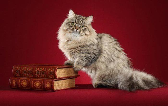 Кошка с книгами