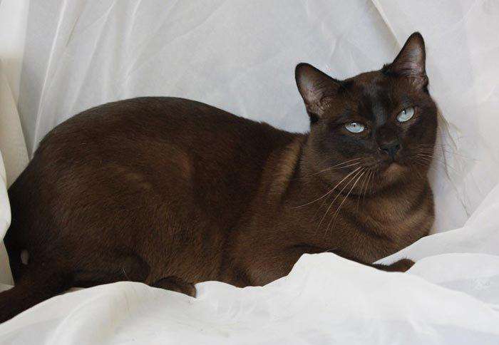 Натуральная норка цвет кота