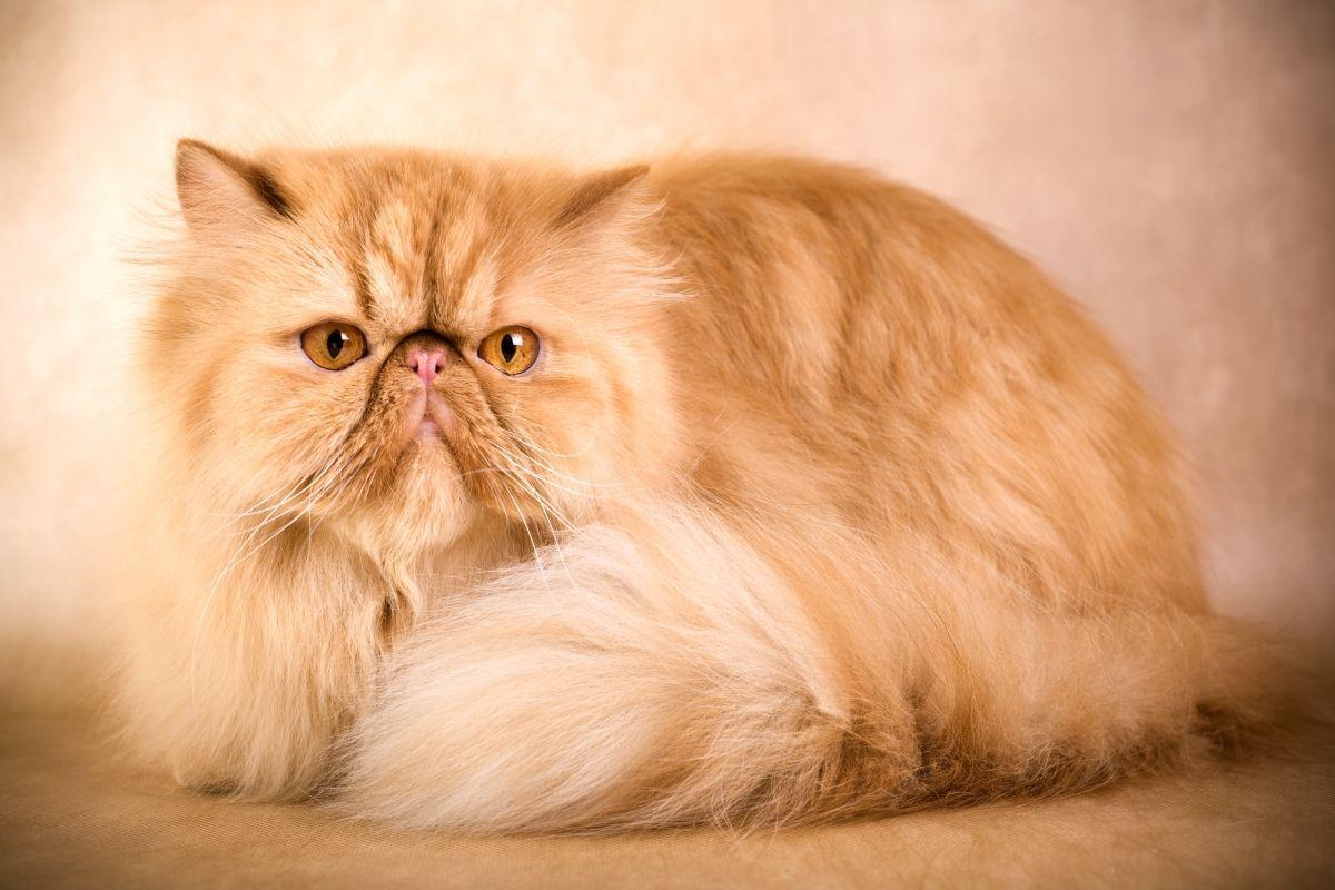 Почему кошка сильно линяет и что делать