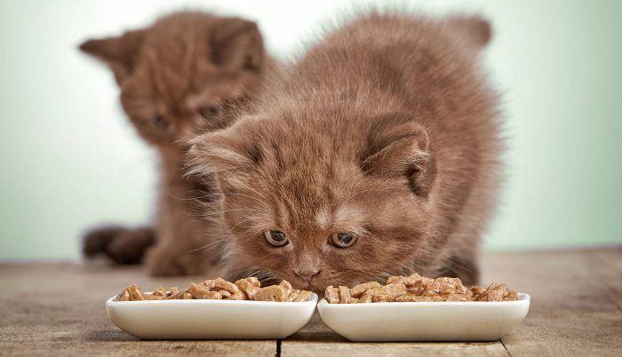 Коричневый котенок