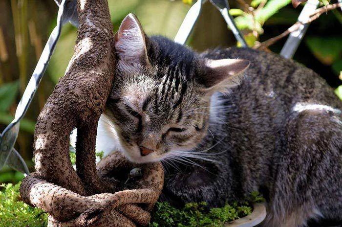Кошка ластится