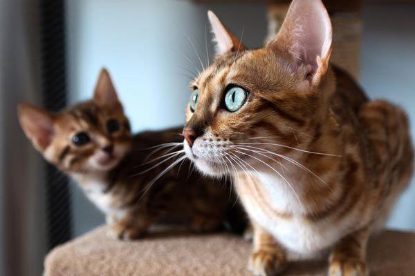 Загадочные коты