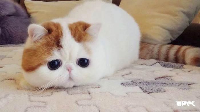 Котик грустит