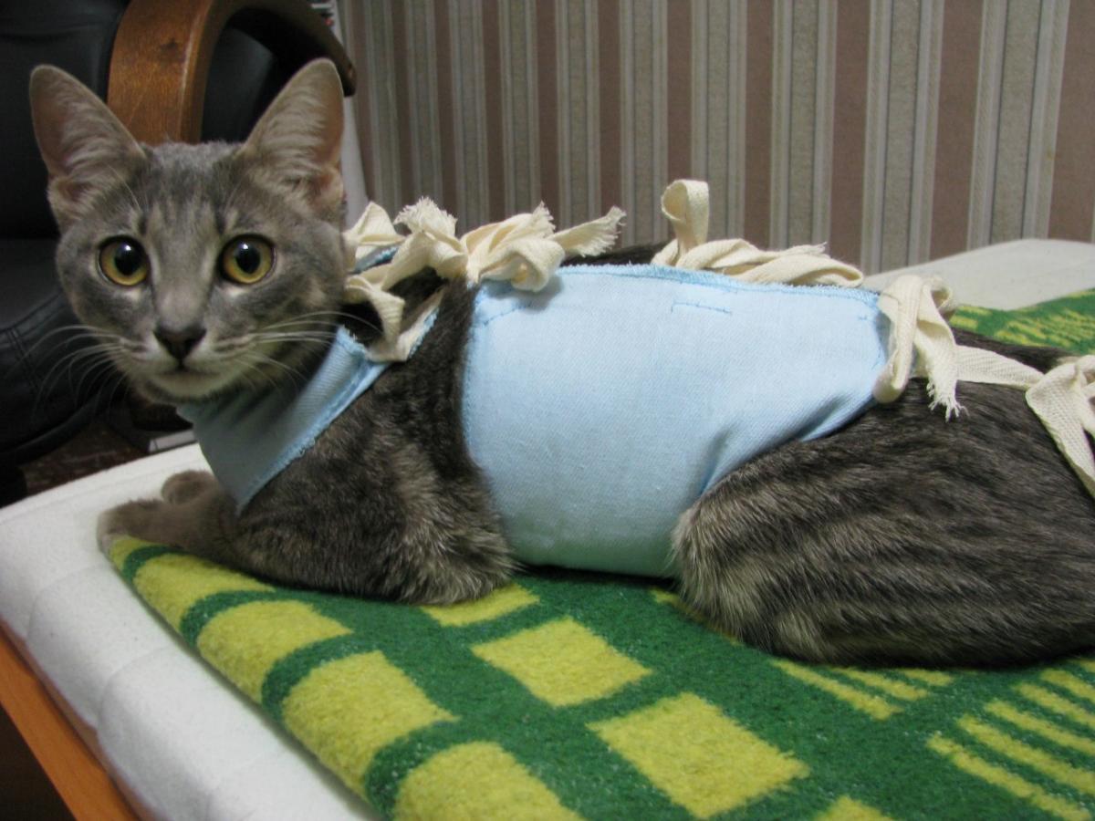 можно ли стерилизовать кошку в год