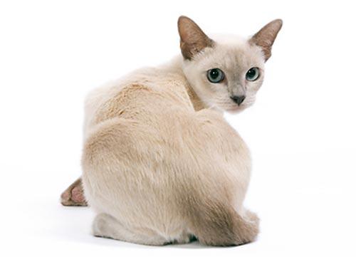 Коти на белом фоне