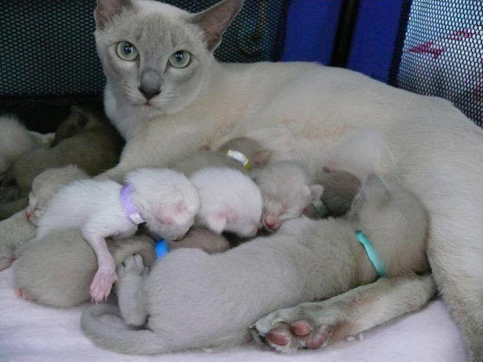 Кошка только что родила