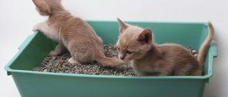 Котята изучают туалет