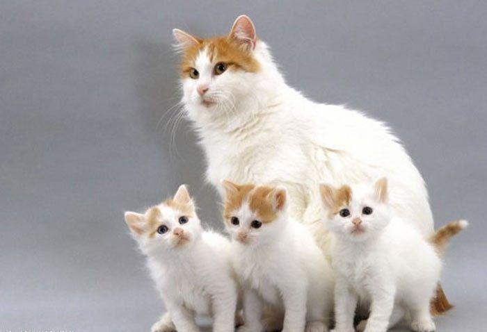 Кошка и три котенка