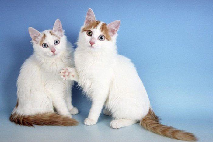 Два игривых котенка