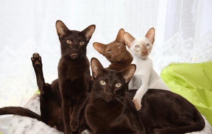 Много котов разного цвета