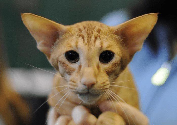 Кот с необычным лицом