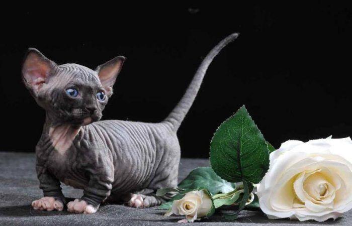 Котенок и цветок