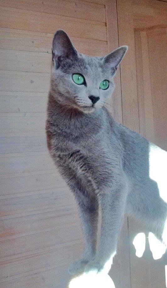 Яркие глаза у кошки