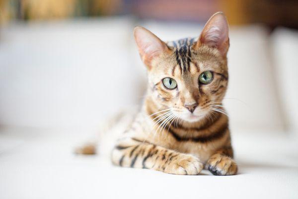 Кошки смотрит