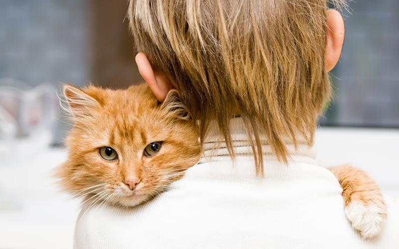 Выбираем кошку по характеру - какую породу кошек выбрать, кого выбрать кота или кошку, как правильно выбрать кошку