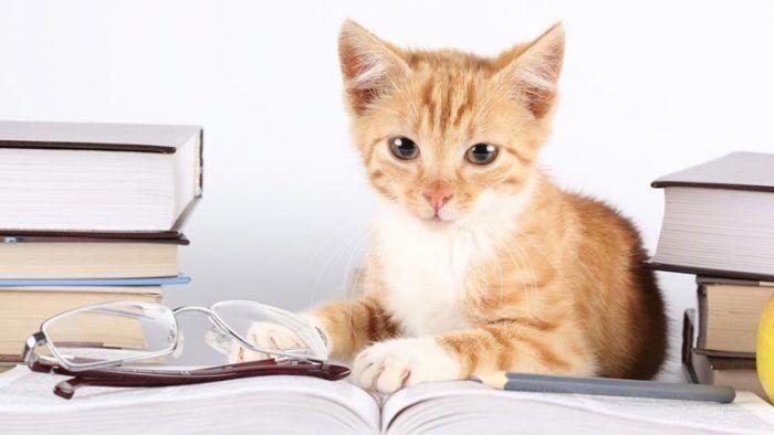 Котенок лежит на книге