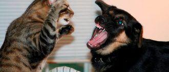 Кошка не любит собаку