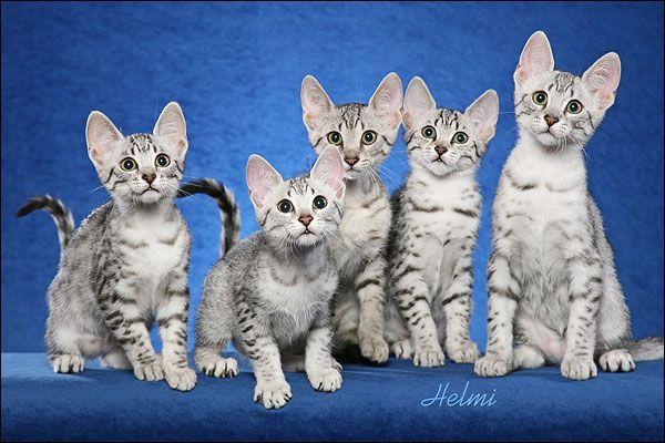 Котята разного пола