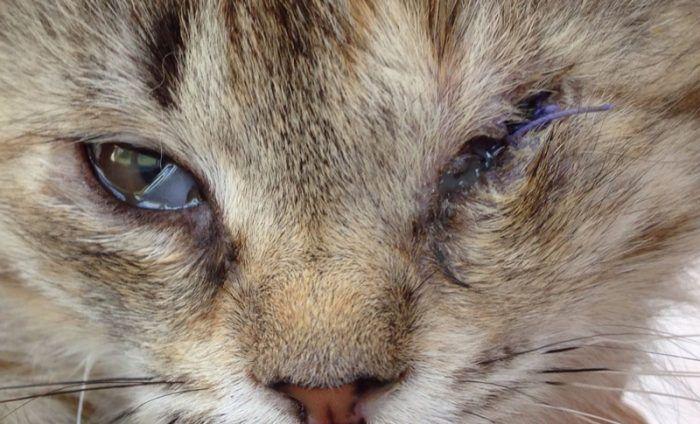 У кота очень болят глаза и гноятся