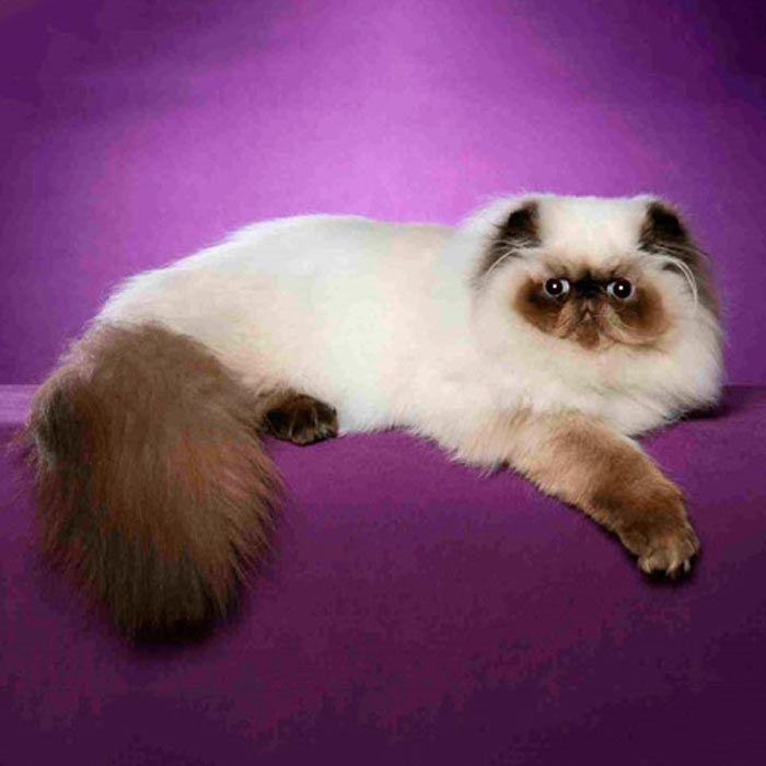 Кошка грациозно лежит