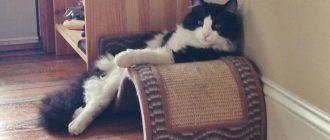 Когтеточка-подушка-лежанка