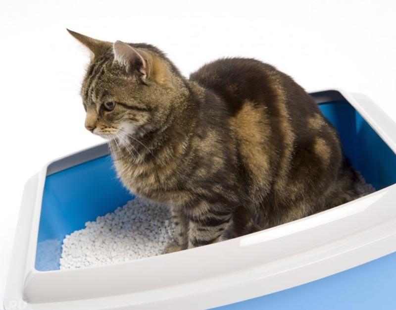 Лактусан для кошек для восстановления кишечника Лактусан для кошек инструкция по применению