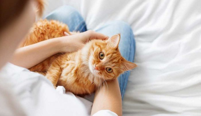 Кошка на коленях