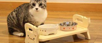 Кот не ест