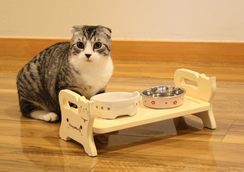 Как правильно выбрать сухой корм для кошек премиум-класса: рейтинг лучшего питания для вашего питомца