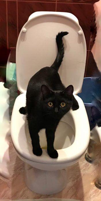 Черный кот на унитазе