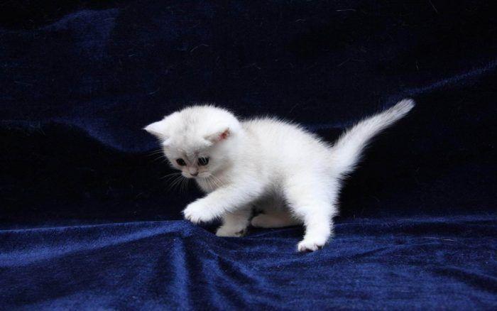 Котенок на синей ткани