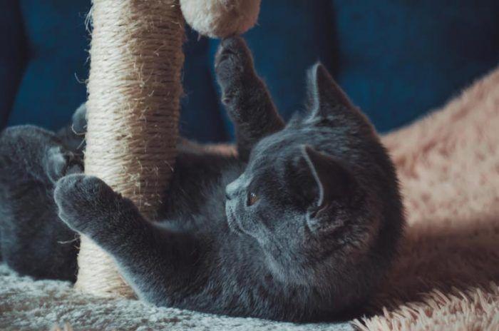 Котенок играет с когтеточкой