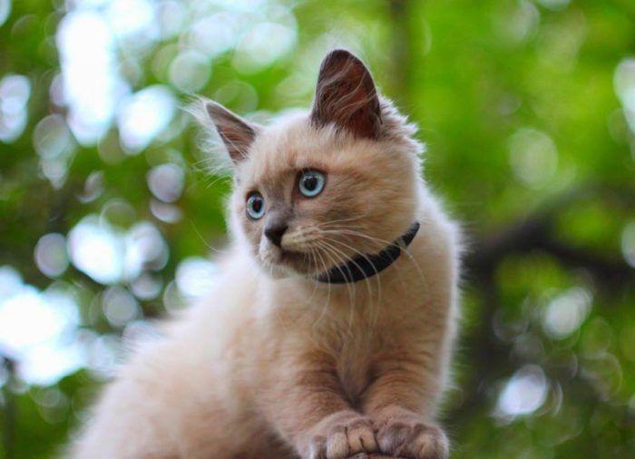Котенок в ошейнике