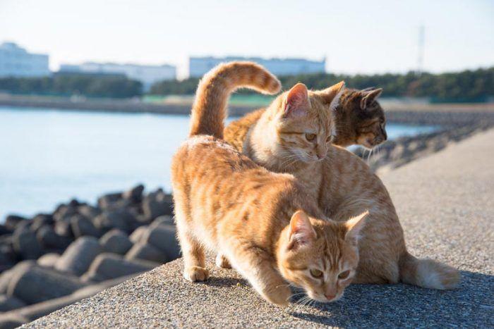 Рыжие уличные коты