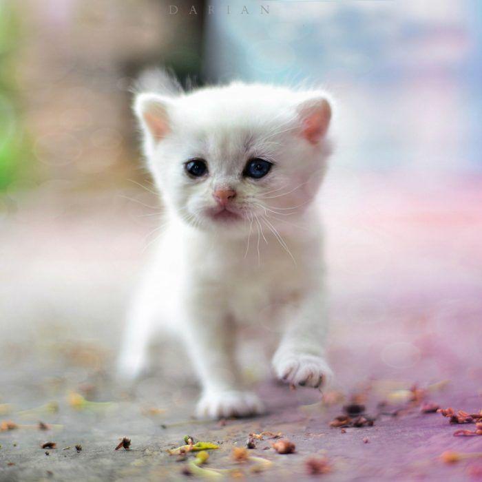 Малыш белого цвета