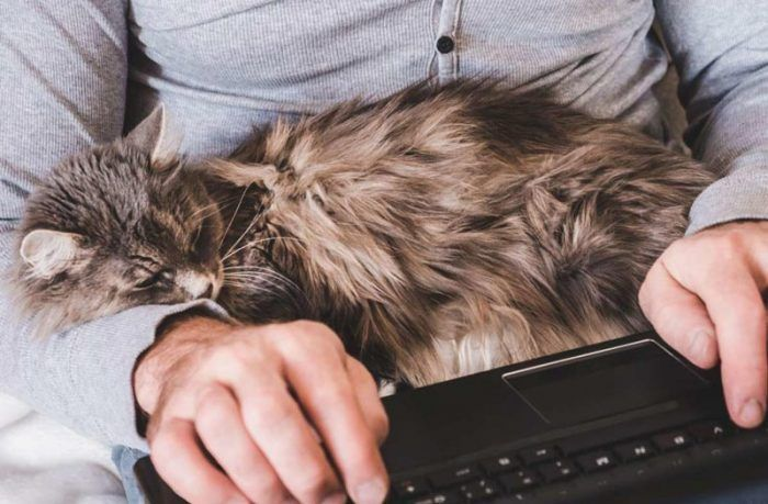 Кот спит на руках