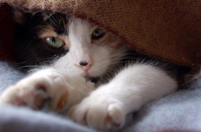 Кошка перебирает лапками