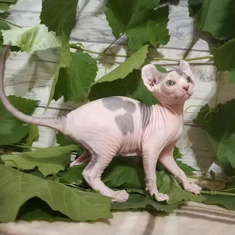 Котенок на фоне зелени