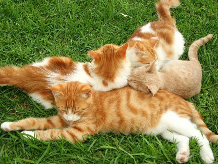 Кошки на травке