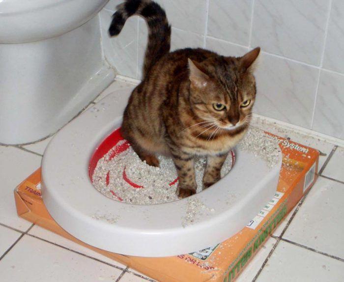 Кот приучается к унитазу
