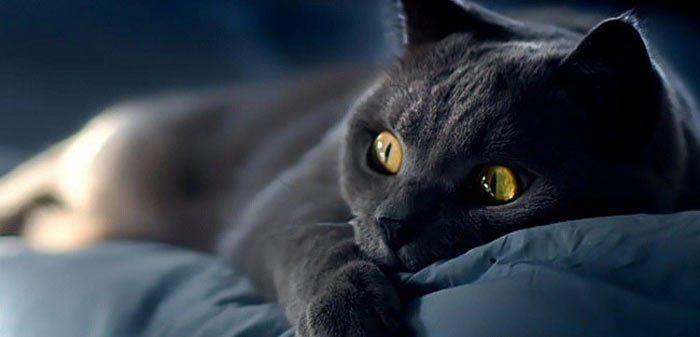 Кот удивился