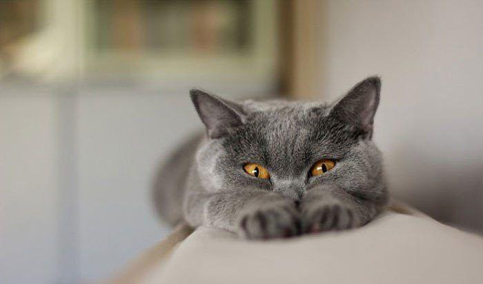 Смешной кот с желтыми глазами