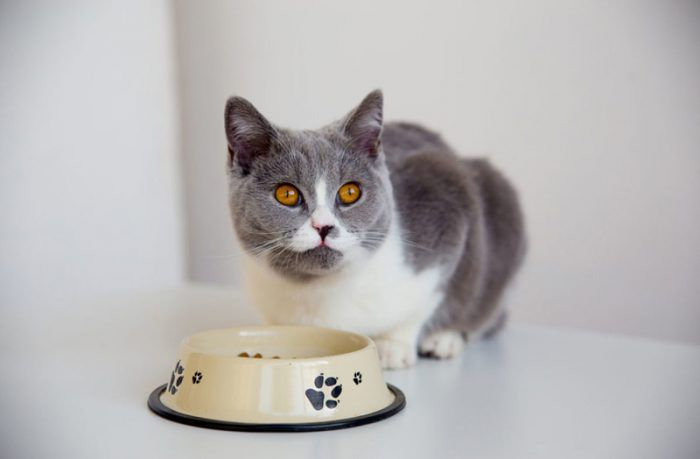 Кот думает есть или нет