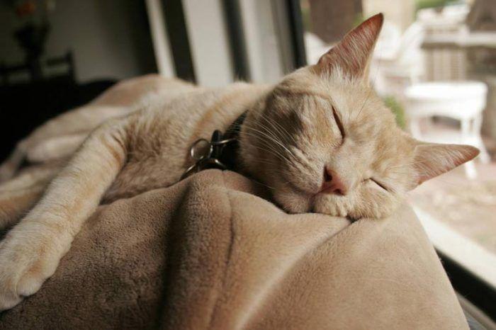 Котик сладко спит